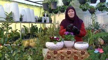 پرورش گلهای پامچال و پریمولا