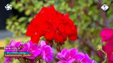 گل شمعدونی