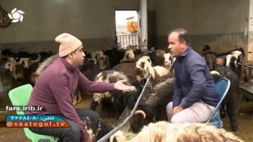 ماجراهای تیمور و فروش گوسفند