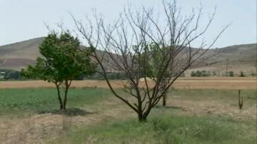 تبدیل اراضی کشاورزی به باغ در سپیدان