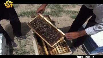 زنبور داری