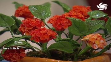 گل شاه پسند