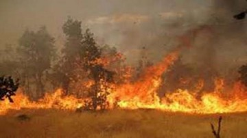 آتش سوزی ارتفاعات شاپورجانی